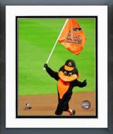 Baltimore Orioles The Baltimore Orioles Mascot Framed Photo